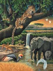 ANIMALI DELL'AFRICA      500pz